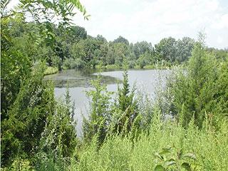 FISH, SWIM, CANOE, BUILD HOME, CABINS ABOVE LAKE