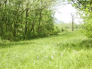 GREEN FIELDS, WOODS W/ 1,477 FT. ON SHENANDOAH RIVER