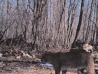 HIKE AND HUNT IN NAT'L FOREST ALIVE WITH WILDLIFE