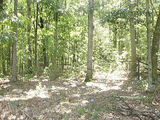 LEVEL HIDDEN FOREST FOR AN IDEAL SHOOTING RANGE