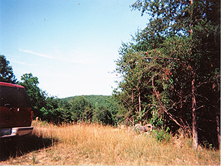 OVERGROWN 3 LOTS FOR MORE THAN 1 HOME