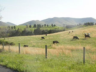 PART OF CATTLE FARM BELOW A SOARING MOUNTAIN RANGE