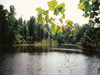 POND IN THE WOODS CAN BE EXPANDED TO LARGER LAKE