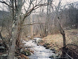 STREAM IN THE HOLLOW WHERE DEER COME TO DRINK