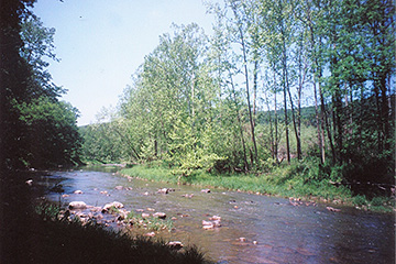 SUPER BUY! RIVER LOTS HERE OFFERED AT UP TO $49,500 EAC