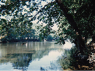 WALK TO SHENANDOAH RIVER TO FISH, SWIM AND CANOE