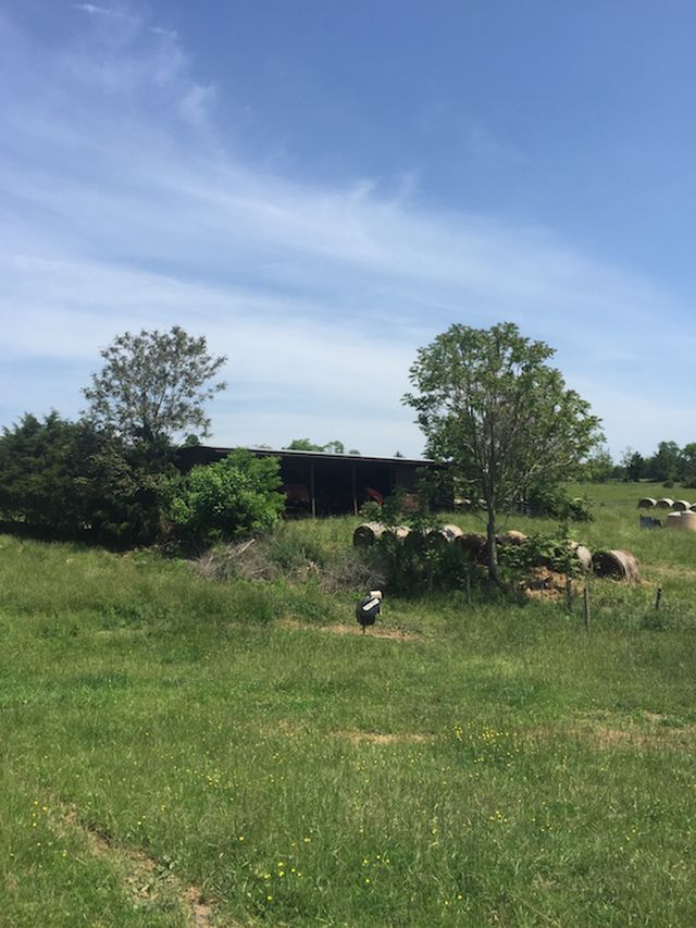 BEST LOCATION NEAR I-81. IN 2 TRACTS