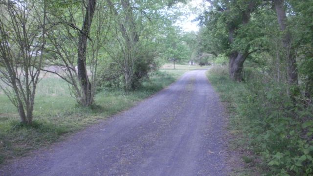 QUIET SETTING ON A SHADY PRIVATE ROAD NEAR TOWN