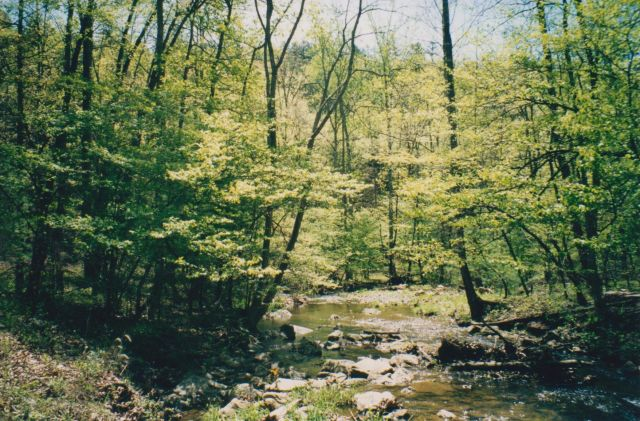 Passage Creek Trout Stream inside Nat'l Forest.